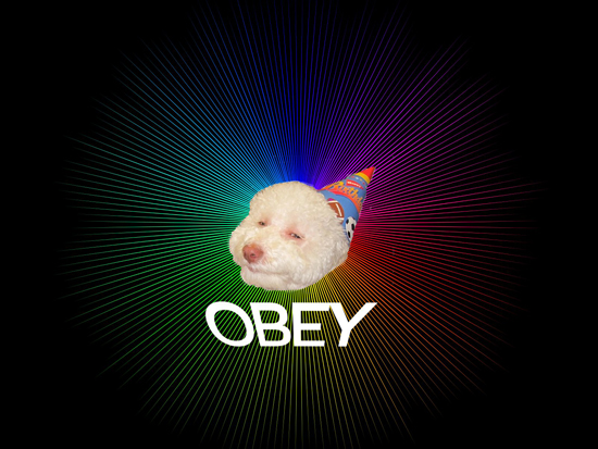 Obey the Epic Birthday Dog