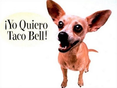 "Taco Bell Chihuahua - Gidget the Dog says ""Yo quiero Taco Bell!"""